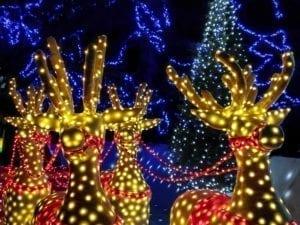 light-up-reindeer